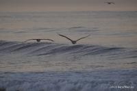 Birds Soaring so Beautifully